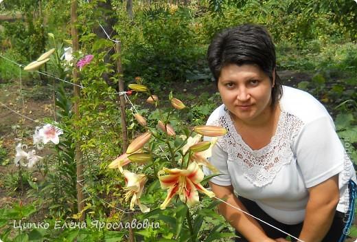 Лилия фиолетовая ароматная. фото 3
