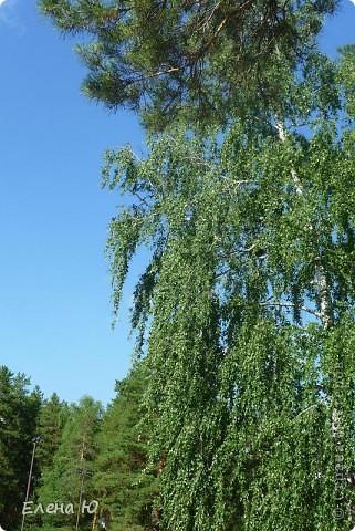 Озеро Еловое фото 33
