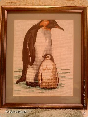 Моя первая работа!Пингвины! фото 1
