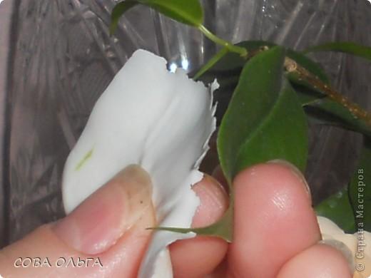 Желтый-это х.ф., а белый-лепесток живой розы. фото 4