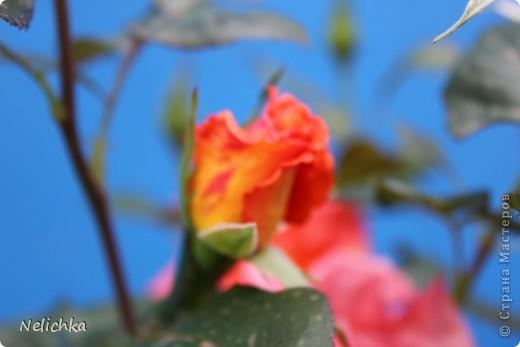 Добрый вечер! Хочу поделиться красотой из своего сада. фото 7