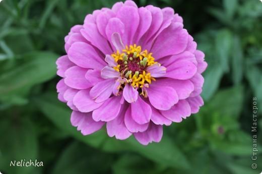Добрый вечер! Хочу поделиться красотой из своего сада. фото 8