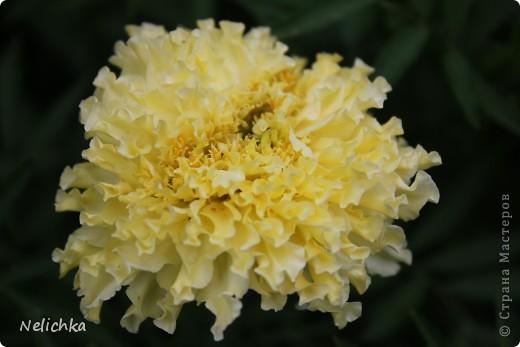 Добрый вечер! Хочу поделиться красотой из своего сада. фото 13