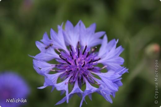Добрый вечер! Хочу поделиться красотой из своего сада. фото 14