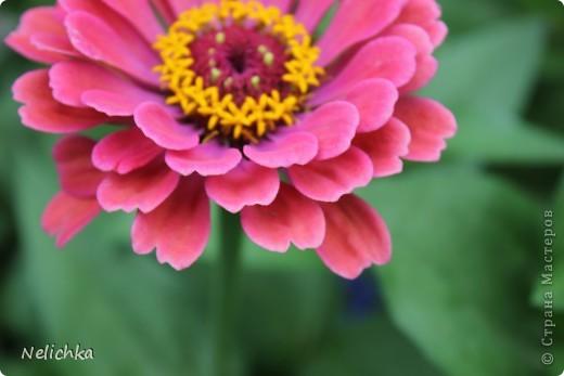 Добрый вечер! Хочу поделиться красотой из своего сада. фото 10