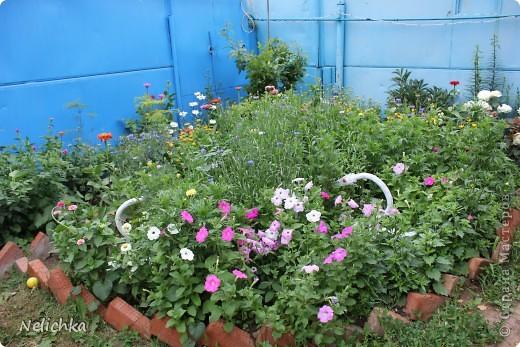 Добрый вечер! Хочу поделиться красотой из своего сада. фото 15
