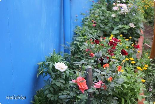 Добрый вечер! Хочу поделиться красотой из своего сада. фото 17