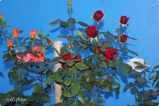 Добрый вечер! Хочу поделиться красотой из своего сада. фото 1