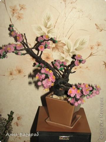 Сакура - подарок маме