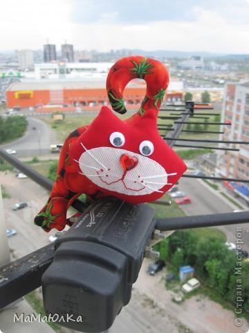 Здравствуйте! Расскажу вам интересную историю, которая произошла сегодня с нами.  К нам в окно постучался кот. А забрался он к нам по телевизионной антенне на высоте 15 этажа!!!! Это он проббирается  к открытому окну.  фото 1