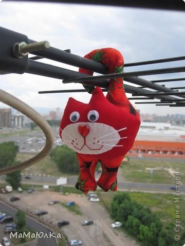 Здравствуйте! Расскажу вам интересную историю, которая произошла сегодня с нами.  К нам в окно постучался кот. А забрался он к нам по телевизионной антенне на высоте 15 этажа!!!! Это он проббирается  к открытому окну.  фото 2