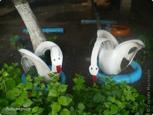 Вот они наши лебедюшки, только после дождя немножко грязные, радуют глазки фото 1