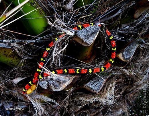 То ли коралловый аспид то ли молочная змея?) фото 1