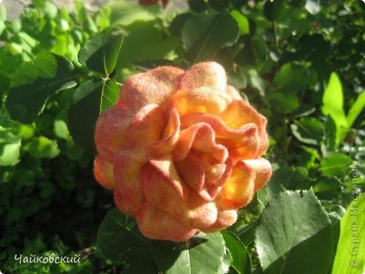 Цветы из шерсти фото 4
