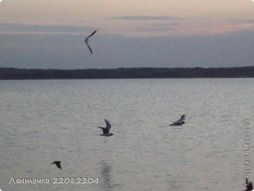 С добрым утром!А ведь оно и правда доброе!Стоило проснуться в 4 утра чтобы увидеть восход солнца!Утро было теплым,немного дул южный ветер,проснулись птицы и встали на крыло. фото 3