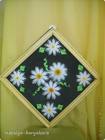 Любимые ромашки. Истинно русский цветок фото 1