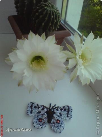 Увидела в просторах интернета бабочек из бисера - и сразу поняла: ХОЧУ. Так родилась такая бабочка. Первая! Надеюсь, не последняя:) фото 4