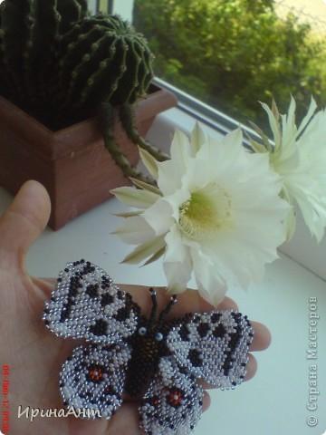 Увидела в просторах интернета бабочек из бисера - и сразу поняла: ХОЧУ. Так родилась такая бабочка. Первая! Надеюсь, не последняя:) фото 3