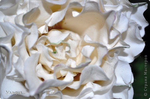 Белая роза из CLAY CRAFT BY DECO фото 3
