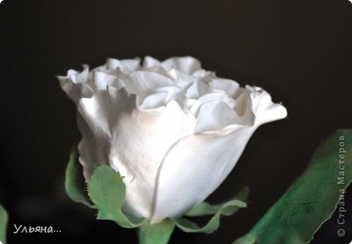 Белая роза из CLAY CRAFT BY DECO фото 4