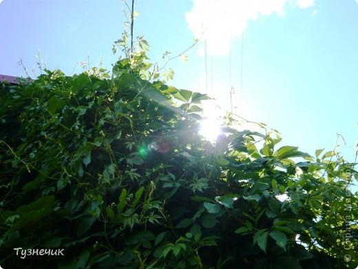 Мы с Тузей приглашаем вас прогуляться по нашей даче...по этой тропиночке мы идем к домику... фото 15