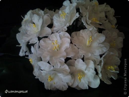 Выставляю на ваш суд фиалочки. Выполнены в натуральную величину. Фиалки любимые цветы моей мамы, поэтому и решила их слепить. Пересмотрела кучу работ мастериц в СМ. Всем, всем спасибо за вдохновение. Конечно изучались и фотографии живых цветов и рассматривались в натуре. фото 4