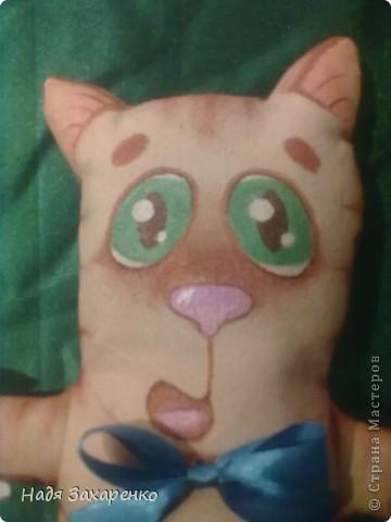 Котик фото 2