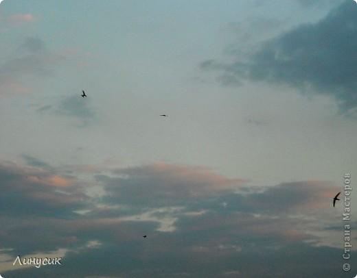 Новое Небо или Маленькие ласточки вместе со взрослыми! фото 10