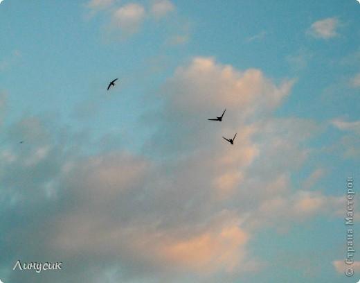 Новое Небо или Маленькие ласточки вместе со взрослыми! фото 9
