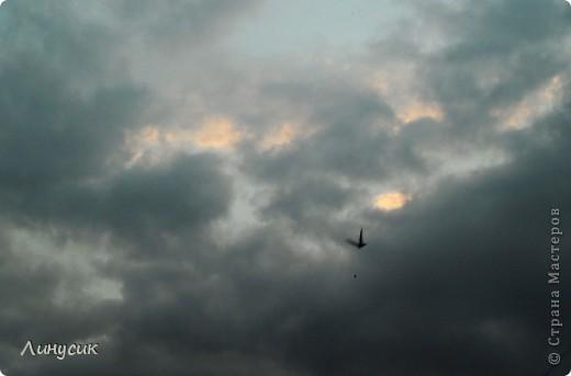 Новое Небо или Маленькие ласточки вместе со взрослыми! фото 12