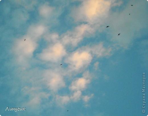 Новое Небо или Маленькие ласточки вместе со взрослыми! фото 14
