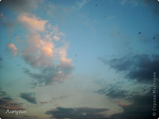 Новое Небо или Маленькие ласточки вместе со взрослыми! фото 15