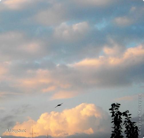 Новое Небо или Маленькие ласточки вместе со взрослыми! фото 1