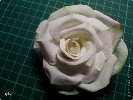 Шикарная роза (Кривулина) фото 3