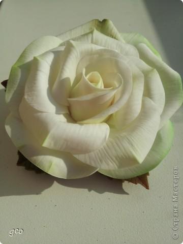 Шикарная роза (Кривулина) фото 7