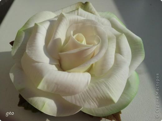 Шикарная роза (Кривулина) фото 1