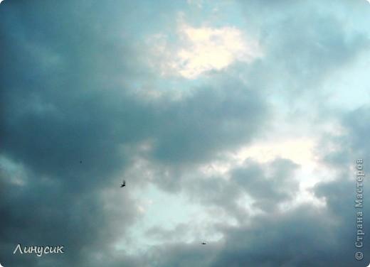 Новое Небо или Маленькие ласточки вместе со взрослыми! фото 13