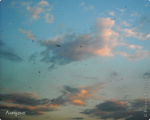Новое Небо или Маленькие ласточки вместе со взрослыми! фото 3