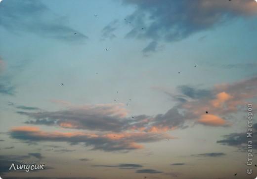 Новое Небо или Маленькие ласточки вместе со взрослыми! фото 4