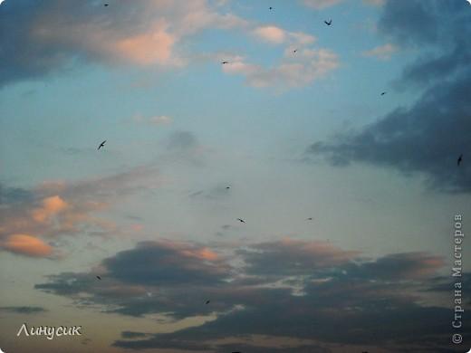 Новое Небо или Маленькие ласточки вместе со взрослыми! фото 5