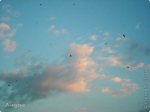 Новое Небо или Маленькие ласточки вместе со взрослыми! фото 6