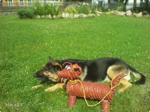 Здравствуйте, дорогие жители страны мастеров!!!Сплела вот такую собачку.Идею подсмотрела на чешском сайте.Только там была такса,а у меня наверное получилась дворняжка. фото 5