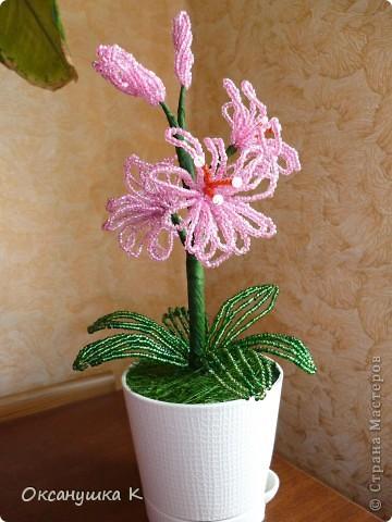 В воскресенье у коллеги по работе день рождения. Вот я и подготовилась. Посадила для нее такой вот розовенький цветочек, которым нужно только любоваться. ну иногда пыль щеточкой стряхивать. фото 1