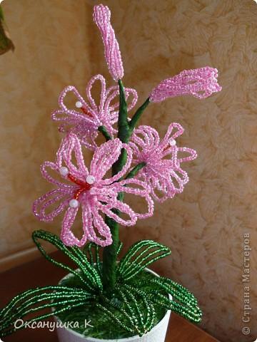 В воскресенье у коллеги по работе день рождения. Вот я и подготовилась. Посадила для нее такой вот розовенький цветочек, которым нужно только любоваться. ну иногда пыль щеточкой стряхивать. фото 3