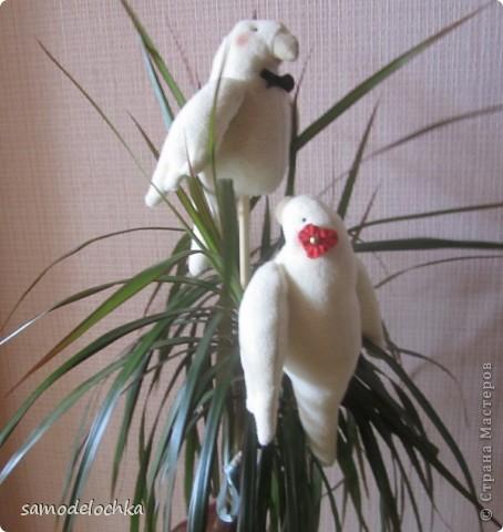 Джек и Джилл. Птичье танго фото 2
