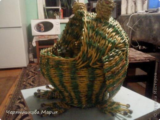 лягушка фото 1