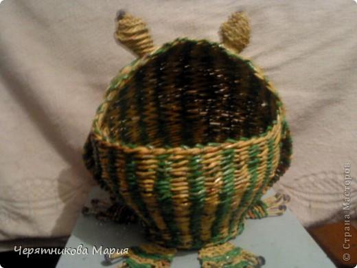 лягушка фото 2
