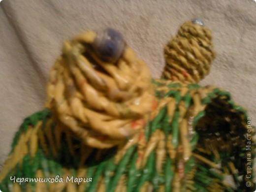 лягушка фото 4
