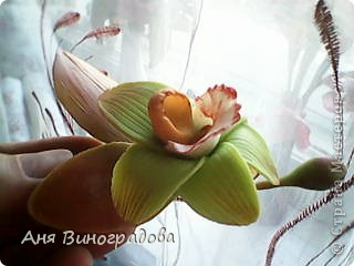 почемуто листики кажутся совсем красненькими,наверно из-за качества фото( снимала на телефон) фото 2