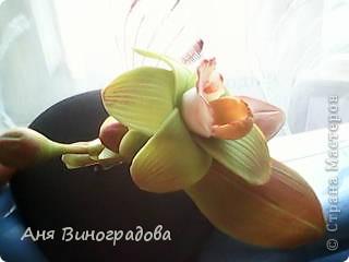 почемуто листики кажутся совсем красненькими,наверно из-за качества фото( снимала на телефон) фото 3